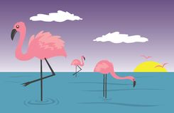 Flamingos Royalty Free Stock Image