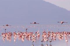 Flamingos   Lizenzfreie Stockfotos