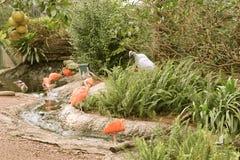 Flamingos Stockfoto