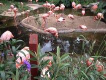 Flamingos Foto de Stock Royalty Free
