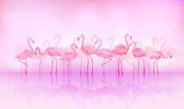 Flamingos. Flock of caribbean flamingos over a lake Royalty Free Stock Photos
