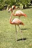 Flamingos Stockbild