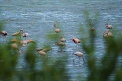 Flamingos Stockfotografie