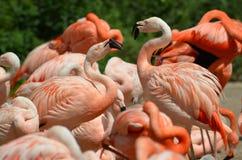 Flamingos Lizenzfreie Stockbilder