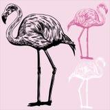 flamingos stock illustrationer