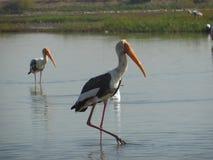 Flamingos 5 Stockfotos