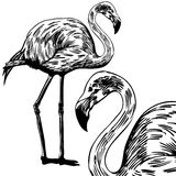 Flamingos Royalty Free Stock Photo