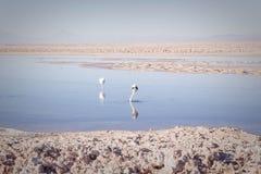 Flamingos auf dem See Lizenzfreies Stockbild