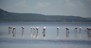 Flamingos auf See Nakuru Lizenzfreie Stockfotografie