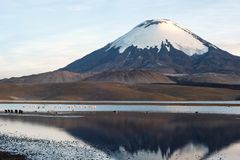 Parinacota Volcano reflected in Lake Chungara, Chile. Flamingos on the background of snow capped Parinacota Volcano reflected in Lake Chungara, Chile Stock Photo