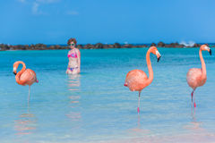 Flamingos beach. Aruba Royalty Free Stock Photos