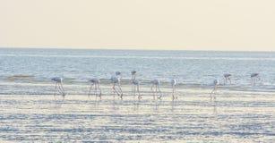 Flamingos at beach. And hunting Stock Photos