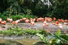 Flamingos bonitos na natureza Fotos de Stock
