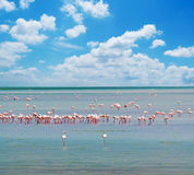 Flamingos and clouds Royalty Free Stock Image