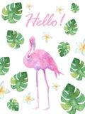 Flamingos cor-de-rosa da aquarela ilustração royalty free