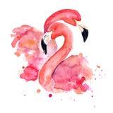 Flamingos cor-de-rosa da aquarela ilustração stock
