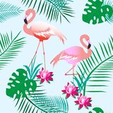 Flamingos cor-de-rosa encantadores Plantas tropicais Fundo claro Teste padrão sem emenda Pode ser usado para o material, papel ilustração stock