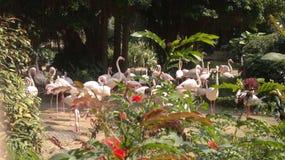 Flamingos cor-de-rosa no parque público da cidade em Hong Kong foto de stock