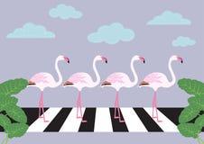 Flamingos crossing zebra crossing vector Stock Image