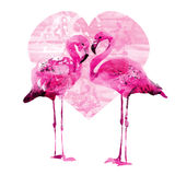 Flamingos da aquarela ilustração stock