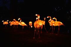 Flamingos in the dark Stock Images