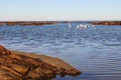 Flamingos in der Bucht stockfoto