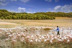 Flamingos in the desert Stock Image