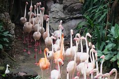 Flamingos, die im Park zusammenarbeiten lizenzfreie stockbilder