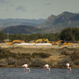 Flamingos and diggers. 3 flamingos and 3 diggers in the same Stock Photography