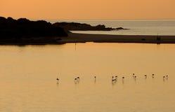 Flamingos at the dusk Stock Photo