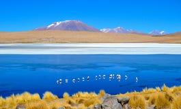 Flamingos- Eduardo Avaroa Andean Fauna National Reserve, Bolivia. Flamingos and their reflections in the water at the colourful Laguna Celeste Royalty Free Stock Photos