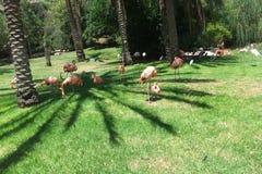 Flamingos - em um ajuste idílico Foto de Stock Royalty Free