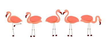 Flamingos. Exotic bird vector. Set of pink flamingos. Exotic birds in different poses Stock Image
