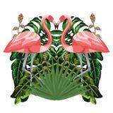 Flamingos exotisch und tropische Vögel stock abbildung