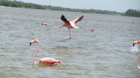 FLAMINGOS. Flying over the sea on a day trip. Tranquility in nature. A magical place royalty free stock photography