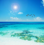 Flamingos flying over a turquoise shore Stock Photos