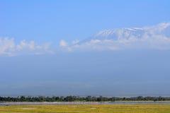 Flamingos in front of Kilimanjaro, Amboseli National Park, Kenya Stock Photos