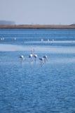 Flamingos heart Royalty Free Stock Photo