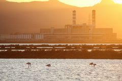Flamingos and heavy industry at sunset - clean energy concept.  Royalty Free Stock Images