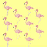 Flamingos, Hintergrund Stockbilder