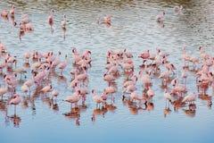 Flamingos im Momela See, Arusha Nationalpark, Tansania lizenzfreie stockfotos