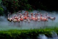 Flamingos im Nebel lizenzfreies stockbild