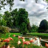Flamingos im Park Stockfoto