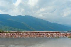 Flamingos im See Bogoria. lizenzfreie stockfotografie