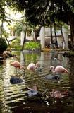 Flamingos im Teich lizenzfreie stockfotos