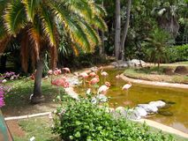 Flamingos im Zoo von Hawaii lizenzfreie stockfotografie