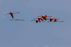 Flamingos at Isla Holbox Stock Photo