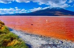 Flamingos in Laguna Colorada in Uyuni, Bolivien lizenzfreie stockbilder