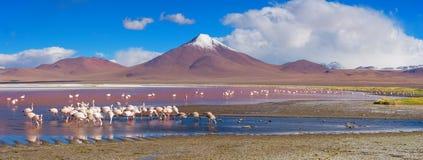 Flamingos in Laguna Colorada, Uyuni, Bolivien stockbild