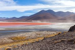 Flamingos Lagunas Colorada, Uyuni, Bolivien stockfotografie
